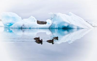 В ледяной лагуне