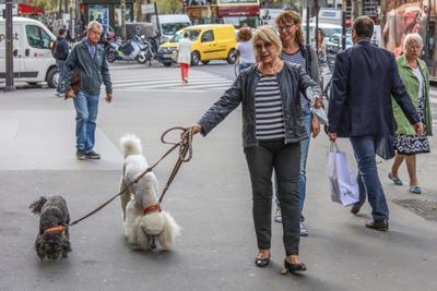 Дама с собачками Дама с собачками