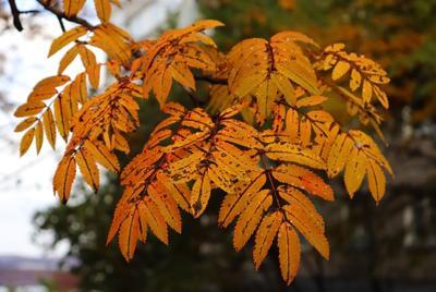 ***Осенние листья природа растения