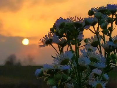 Не опаздывай обратно, лето. Закат солнце цветы ромашки