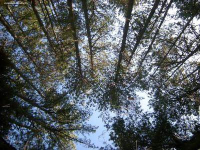 Лесное зеркало лес отражение зеркало