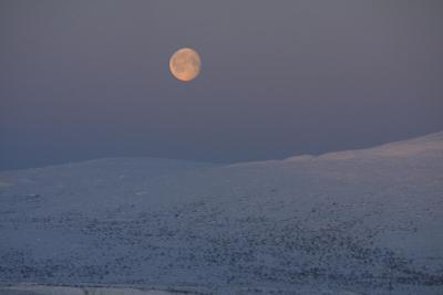 Полярная ночь полярная ночь, Мурманская область