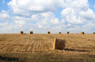 ***соломенные поля поле солома красота жара сенокос желтый голубой белый стог сноп