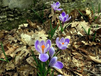 ВЕСНА.МАРТ. цветы весна март
