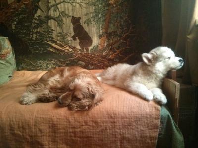 три медведя :) три собаки сон отдых