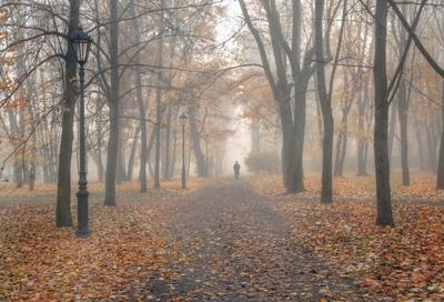 Туманный парк Монрепо. Выборг