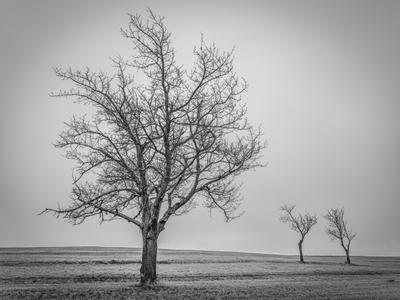 Древо пейзаж природа деревья поле зима