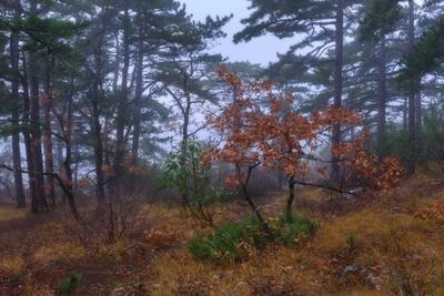 Сладкая парочка ) Крым лес туман деревья