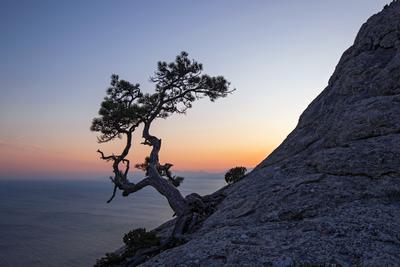 Со скалами суровый век деля... Новый Свет Крым сосна закат лето