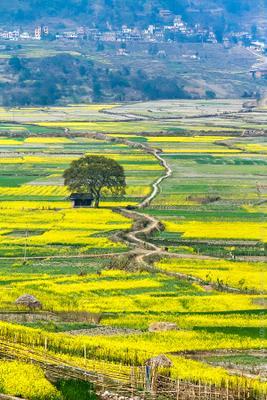 желтая долина Nepal