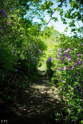 Выхожу один я на дорогу... Весна azalea