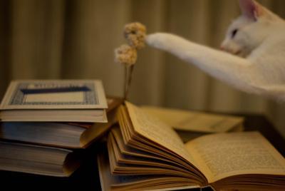 уютный вечер кот книги цветы вечер тепло уют