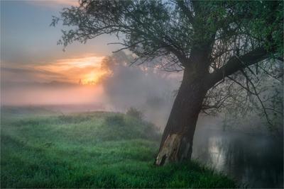 Утро на околице утро туман река Солоницевка