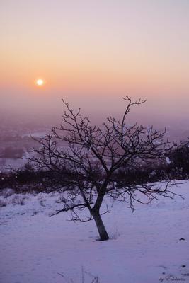 Зимний вечер. Зима дерево природа вечер пейзаж закат