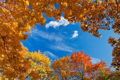 Autumn листва осень желтый оранжевый небо облако