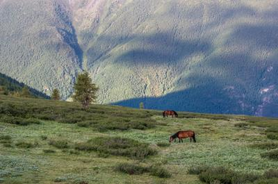 Земные облака. горы алтай горный конь лошадь гора пейзаж природа россия ник васильев красота долина кучерла тени облака