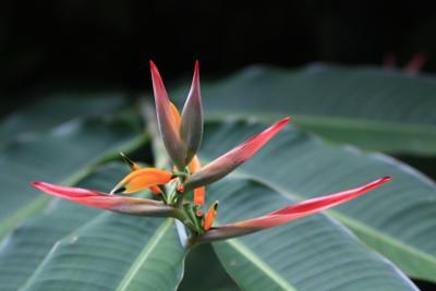 Заморский цветок