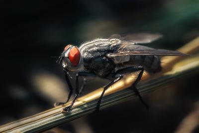 Цокотуха... муха макро природа насекомые глаза лето свет цвет фон боке