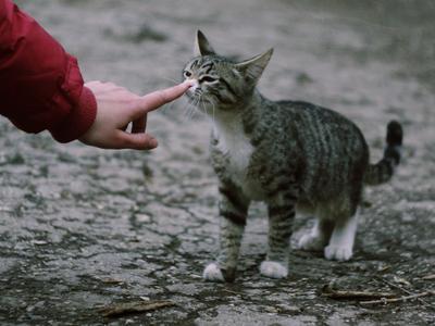 Знакомство кот, котик, рука, знакомство