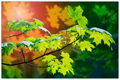Фантазия с весенней листвой листья клена, ветка клена, лес, фантазия