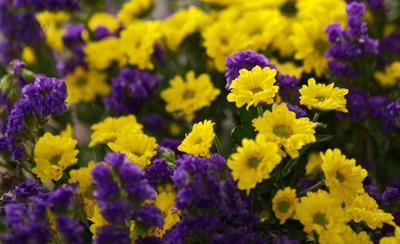2.09 букет, цветы, осень, сентябрь