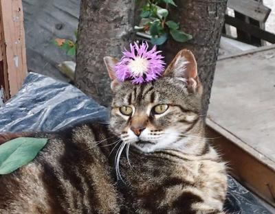 Наша королева Тигра!!! Крым Евпатория кошка красотка