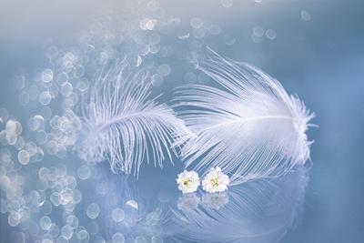 Зимняя фантазия... close-up