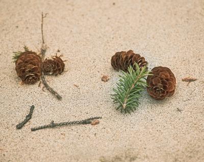 шишки на песке