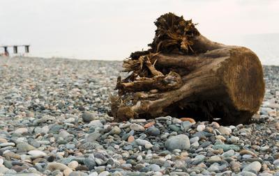 *** пляж берег пень