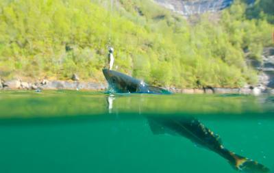 Джиг и в Норвегии джиг сплит рыбалка сайда джиг