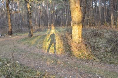 ОНИ давно среди нас... лес тень