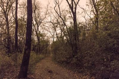 Роща. Осень. Ночь. осень роща лес деревья ночь пейзаж выдержка