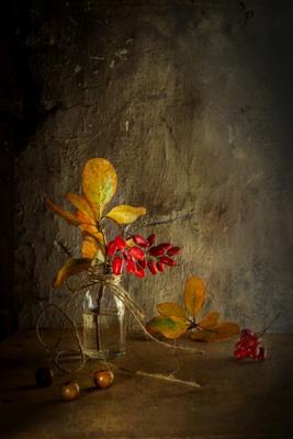 Вкус барбариса Барбарис осень таинственность загадка свет аромат барбариса