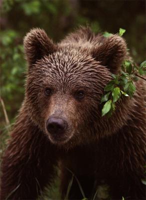 Медведик медведь, мишка, михалыч