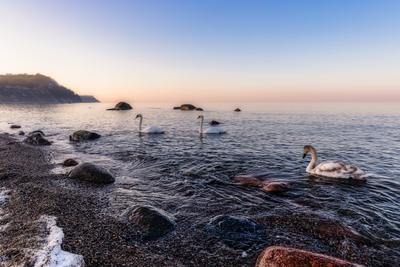 Февральский вечер лебеди море