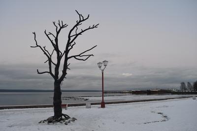 Дерево желаний Петрозаводск набережная