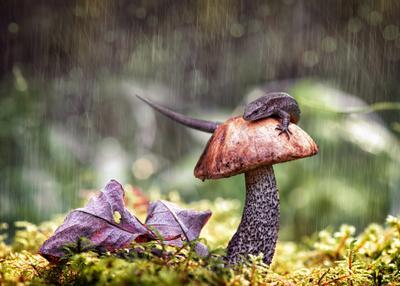 Дождливый этюд ящерица природа лес макро гриб лист дождь