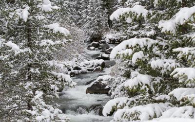 **лесной ручей*