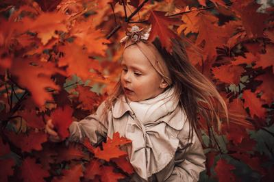 Осенний лист клёновый и Софа осень натюрморт цветы клён ребёнок