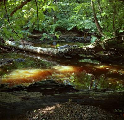 *** ручей река лес