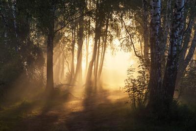Утро в березовой роще утро туман лето Фрязино Гребнево