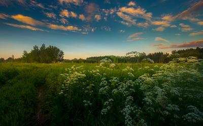 Ах,лето,трава по пояс...