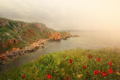 Яйла яйла, божури, камен бряг, българия
