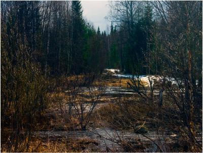 Тот дикий лес, дремучий и грозящий...