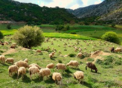 La pastorale pastoral summer sun valley plateau greece sheep пастораль лето солнце долина плато греция овцы