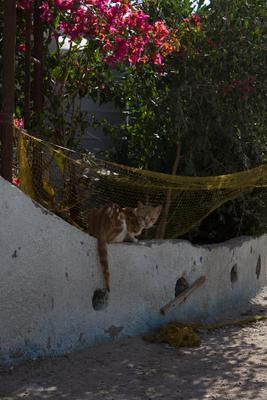*** кот сеть