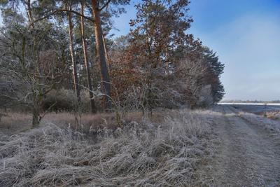 Дорога по краю леса утро лес дорога туман