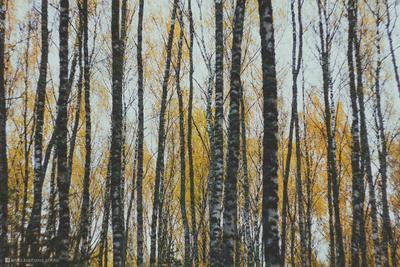 Тишина тишина лес осень пейзаж природа