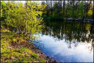 Опять весна на белом свете... Измайловский лес