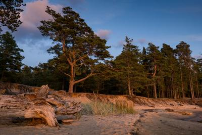 Деревья освещенные солнцем на закате